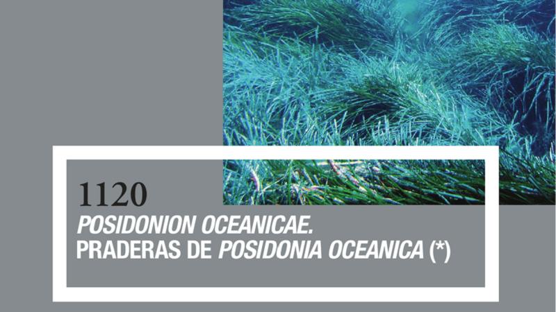 1120 Posidonion oceanicae. Praderas de Posidonia oceanica